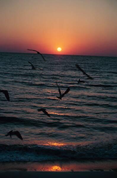 Sunny South Lake Boyton Beach Fl